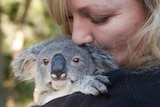 Koala carer Sam Longman cuddles baby koala Boston.