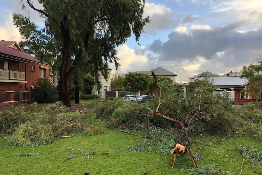 Trees fallen over in a park