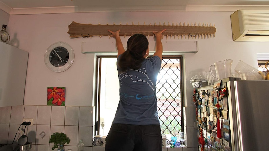 A photo of CDU researcher Christy Davies on a step ladder, pulling down a rostrum from a kitchen wall.