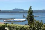 Salmon pens at Huon Aquaculture, southern Tasmania