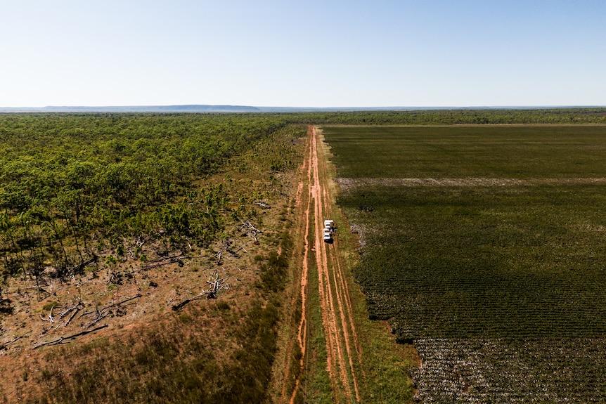 Cotton crop at Douglas Station - Drone 1