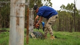 A young man bends over replacing wire on a fence line