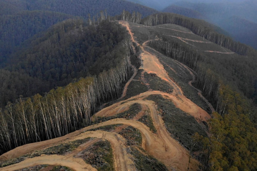 A muddy windy road and felled trees at a logging site on top of a steep hill, surrounded by a tall green forest and mountains.