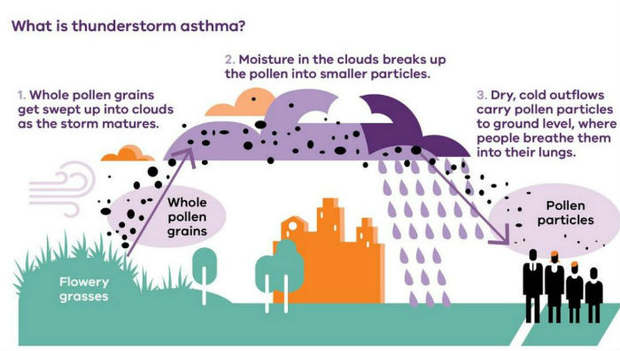 Diagram of the causes of thunderstorm asthma
