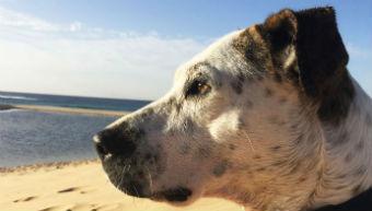 A dog on the beach.