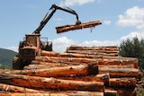 The harvested logs being stacked ready for collection