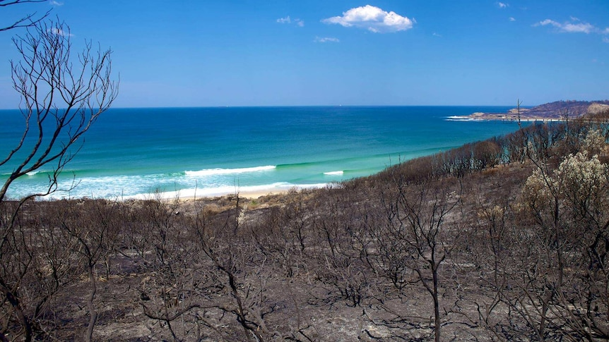 The scorched terrain at Catherine Hill Bay in October 2013, when bushfires tore through the area.