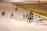 Eight greyhounds race down a sand track at Cannington.