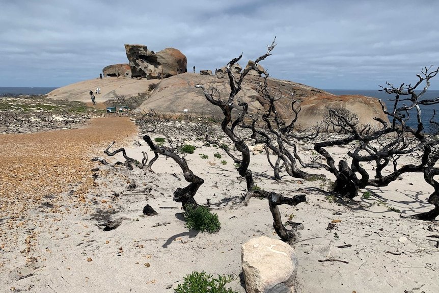 Bushfire-damaged trees in the foreground, and large rocks in front of the ocean in the background.