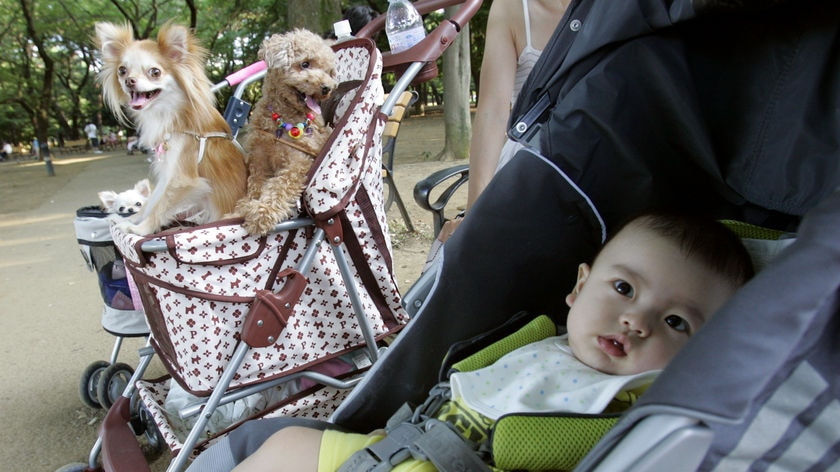 Move over, baby ... dogs now outnumber children under 10 in Japan.