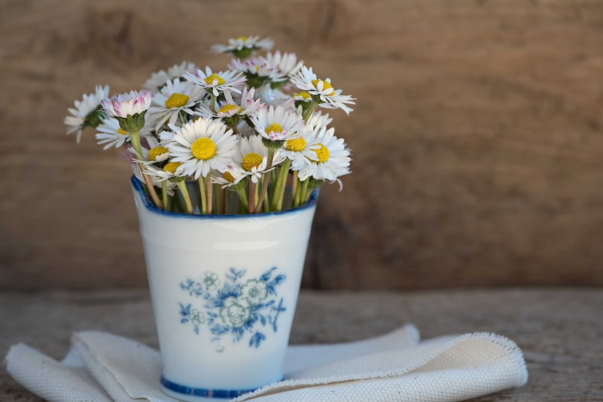 Daisies in a white and blue vase