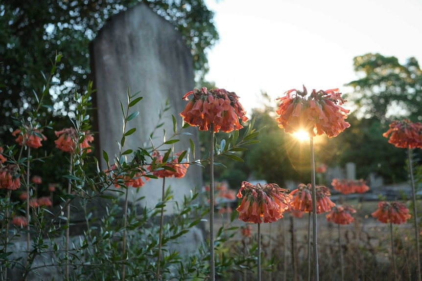 A grave stone with flowers in the foreground and the sunset behind.