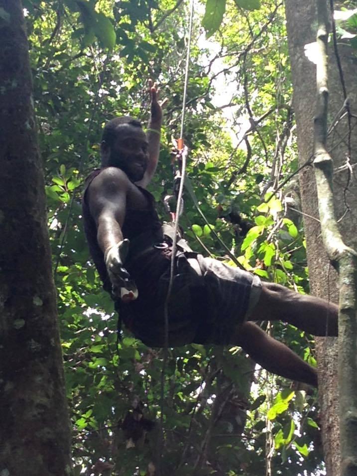 Ranger Eroni Matatia, the protector of iguanas on Fiji's Yadua Taba island, in a canopy sling during a forest survey.
