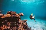 A woman snorkels at Lizard Island.