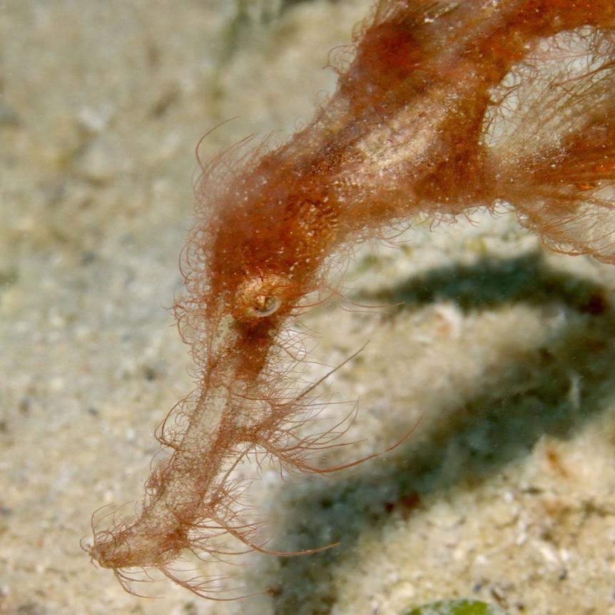 strange looking marine creature with orange strands and large eye
