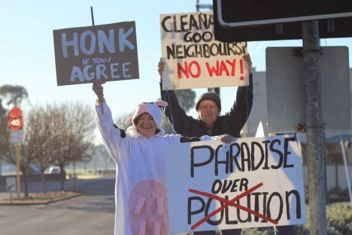 A woman dressed as a cow holding a protest sign about pollution.