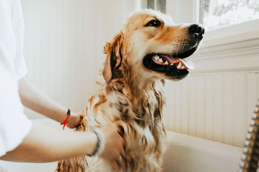 How Often Should You Really Wash Your Dog Abc Everyday