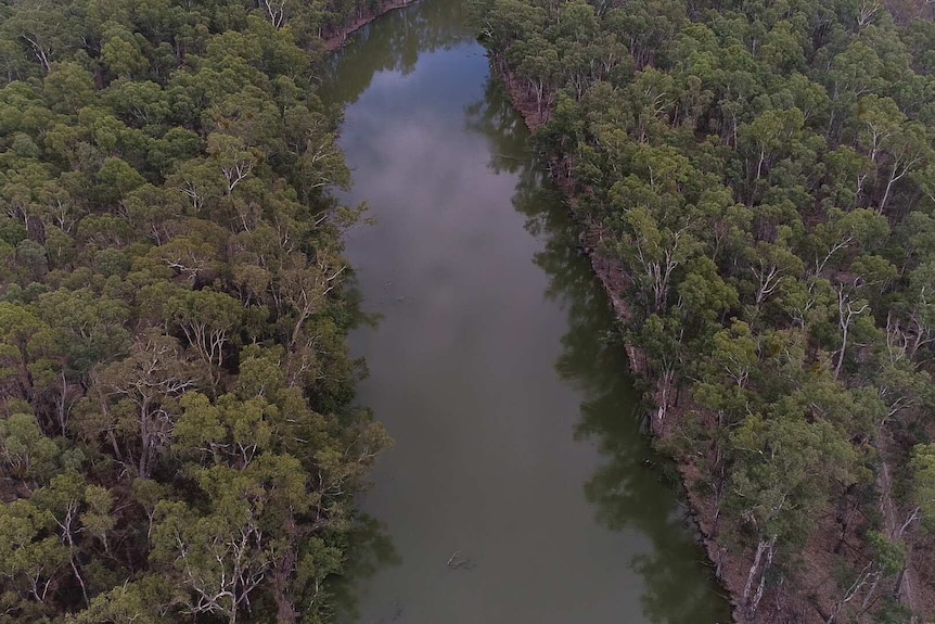 A narrow river runs through the centre of the image, on either side is a thick blanket of river red gum trees.