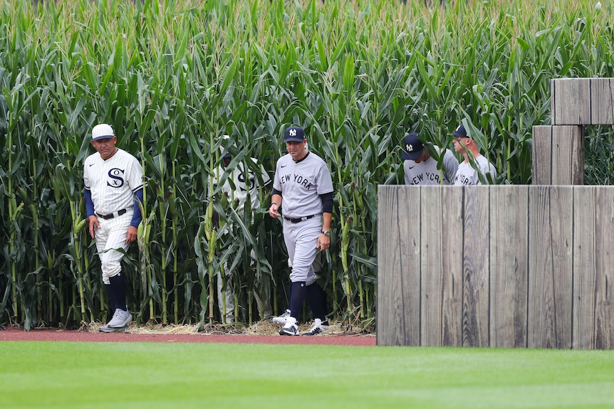 Players in baseball kits emerge from a field of corn