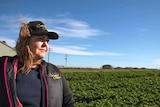 Farmer Deborah Corrigan looks over one of her crops, with a new housing development in the background.