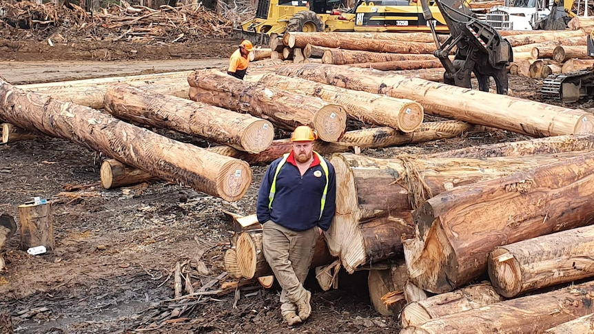Brett Robin stands in the forest, surrounded by harvested timber