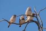 Birds are abundant at the Paroo Darling National Park
