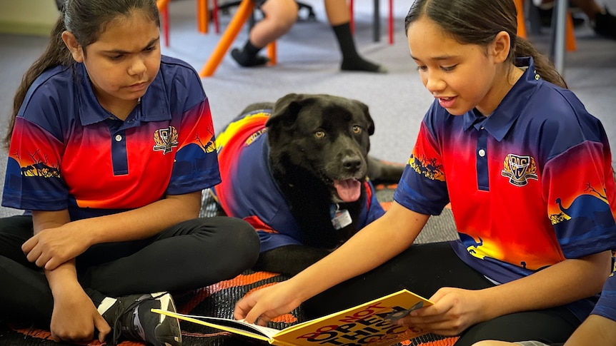TwoDareton students read to the school's therapy dog Sheekie during class.