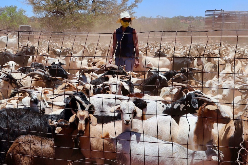 A woman wearing a hat and mask across her mouth stands in a dusty yard of goats.