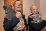 Tony Abbott and Vladimir Putin cuddle koalas