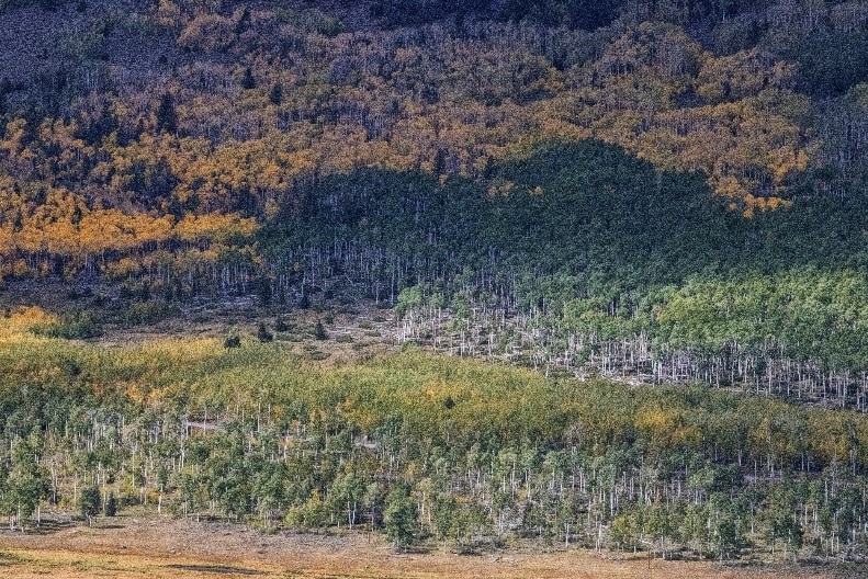 A panoramic view of a forest.