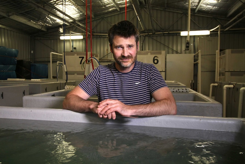A bearded man in a striped shirt looks solemn as he leans on a tank of shellfish in a shed.