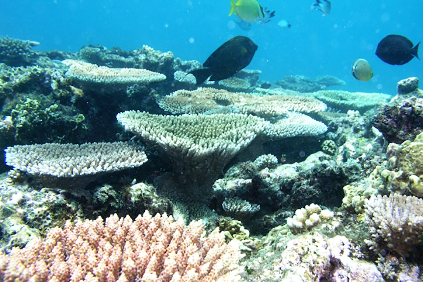 Fish and coral at Ellison Reef on Queensland's Great Barrier Reef.