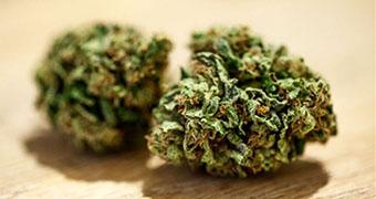 A close up of Marijuana 340x180