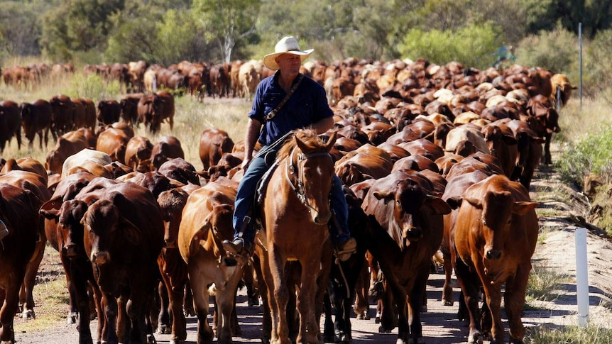 Control of stock routes to be handed back to councils under Queensland government plan.