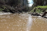 Thousands of gas bubbles on the surface of Charleys Creek near Chinchilla.