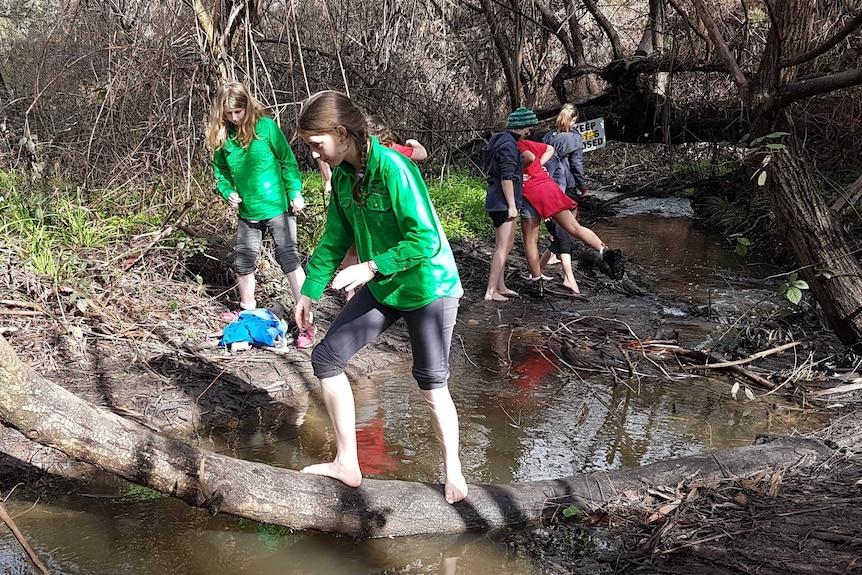 Students explore a creek in bushland.