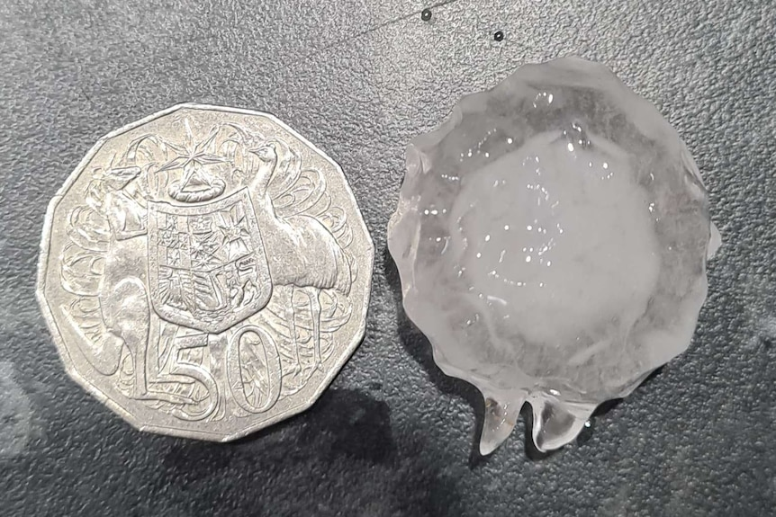 A 50 cent piece sits next to a piece of hail that's around the same size.