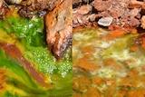 Composite of bright green sludge in a creek.