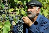 Georgian grape vines.