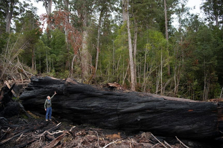 A man stands pointing in front of a large blackened tree trunk on the forest floor