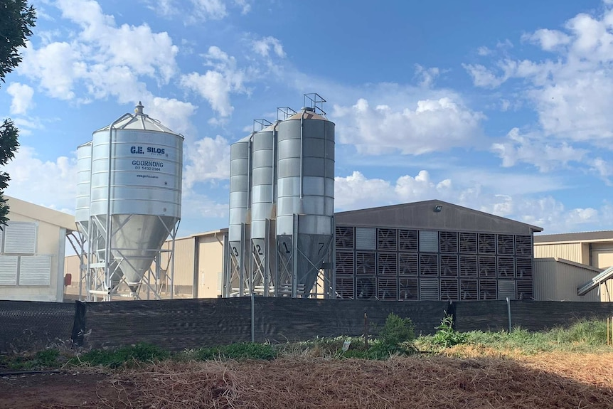 A large shed sits next to big metal silos on a farming property.