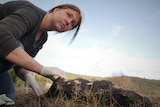 Woman looking into the distance while crouched over and handling the leg of a dead quoll on a road.