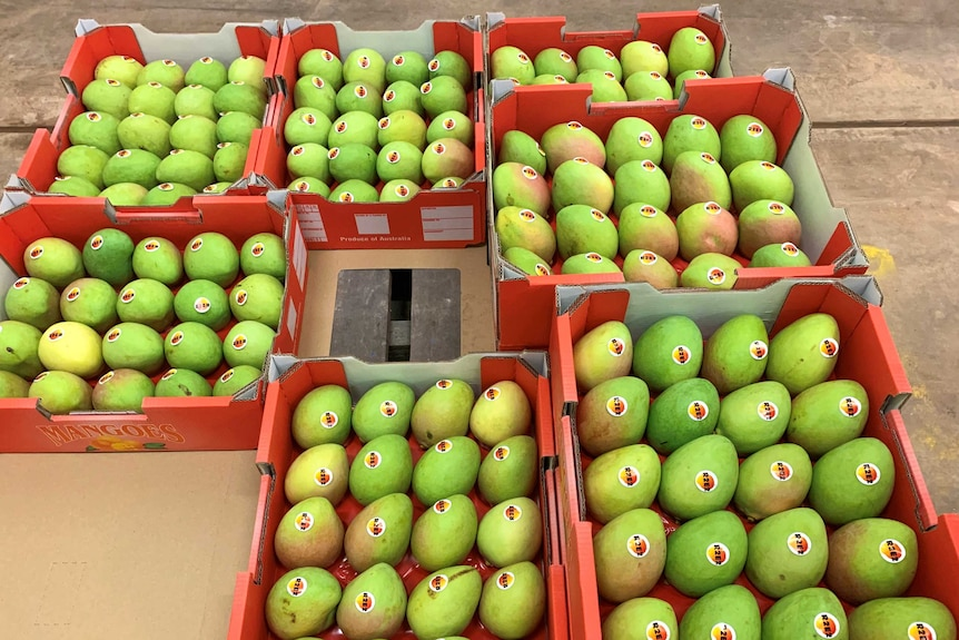 Seven red boxes of mangoes in Kununurra packing shed