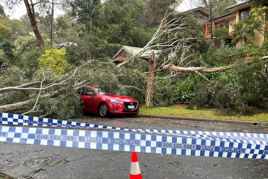 A large tree on top of a red car after a storm.