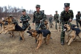 North Korean soldiers, military dogs take part in drills