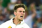 Mitch Marsh jumps in the air to celebrate wicket