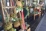 Succulent plants in jute rope balls hanging from a wooden frame out the front of a shop