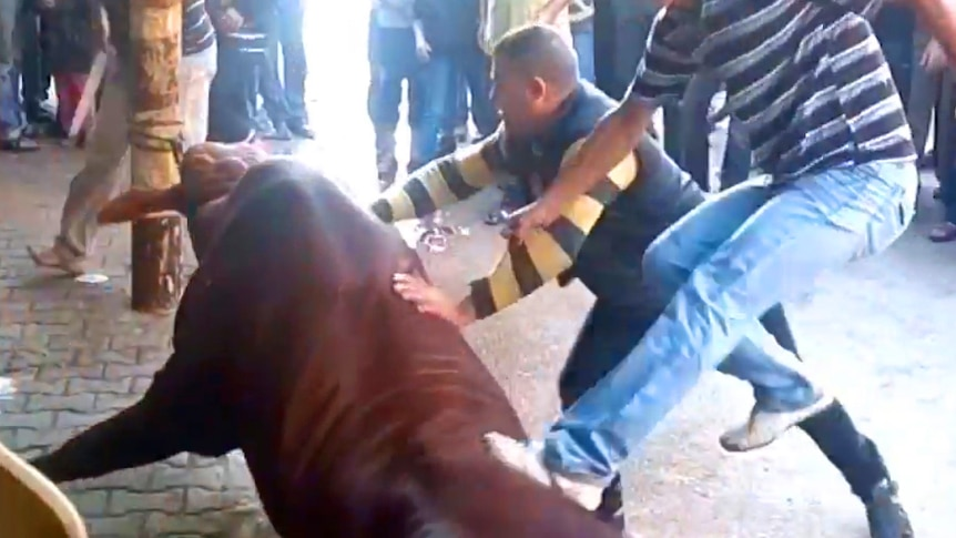 Few are aware that Islam sets a detailed and rigid set of rules regarding animal handling.