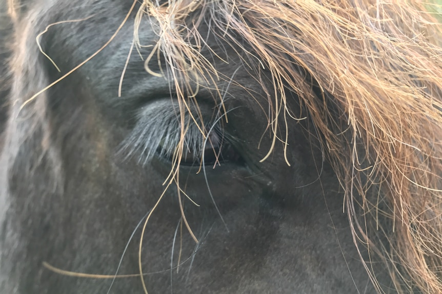 Arty close up of Reijker the horse's eye with his eyelashes and mane.