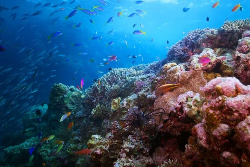 A colourful reef and fish underwater.